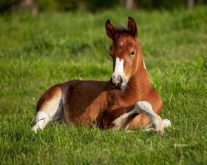 Amazing-Horses-5