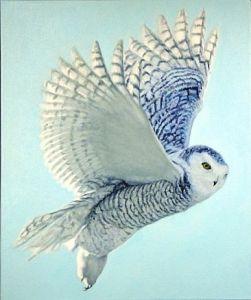1126_owl7