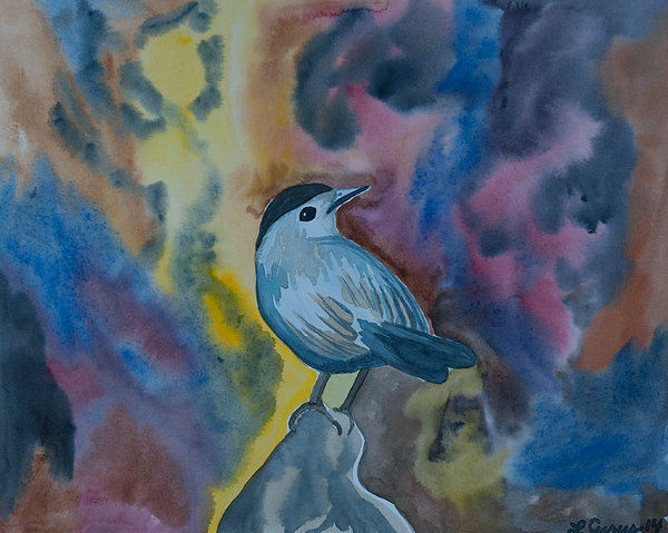 watercolor-gray-catbird-cascade-colors